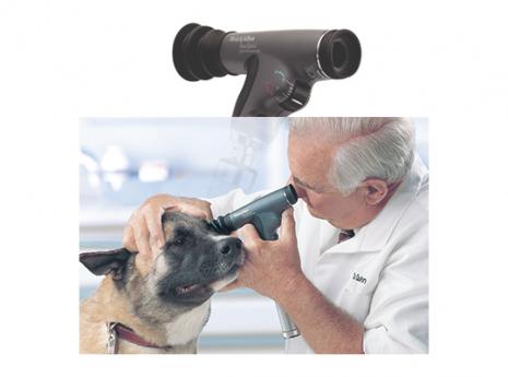 panoptic vet